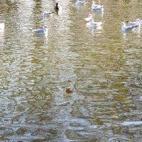 Городской пруд в конце ноября :: Александр Скамо