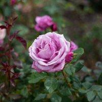 Красота цветка :: Alexandra Yudina