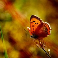 а вот и бабочки опять... 12 :: Александр Прокудин