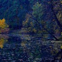 Уходит осень… ей уже пора... :: Ольга Русанова (olg-rusanowa2010)