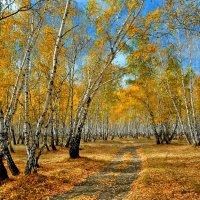 Красота осенняя :: Mikhail Irtyshskiy