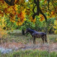 Конь в лесу :: Денис Козьяков