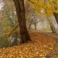 Туманен межсезонья лабиринт. :: Юрий. Шмаков