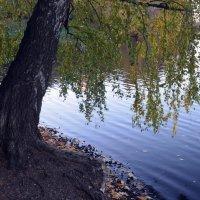 над водой склонённая... :: Галина R...
