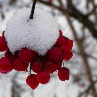 Калины, замёрзшая гроздь :: Милешкин Владимир Алексеевич