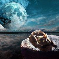 в лучах луны :: derber d