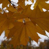 Ещё вчера была осень ... :: Алёна Савина