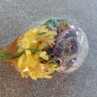 Красивая морская непонятка :: Natalia Harries