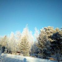 Зима в Новоаганске :: Valentina Perfileva
