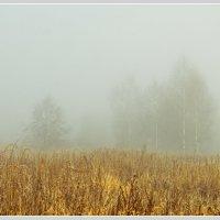 туман :: Олег Осипов
