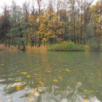 Осень :: Евгений Седов
