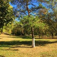 Осень в парке :: Алла ZALLA