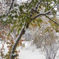 Зима и осень - два в одном.... :: Галина