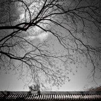 Лунные ворота :: Марина Лукина
