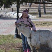 Ездовой козел Мартин и ребенок :: Наталья