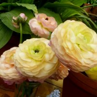 Лютики цветочки :: Татьяна Лобанова