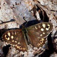 опять бабочки...2 (первомайская) :: Александр Прокудин