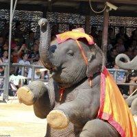 Слон танцует, и поет, и садится, и встает... :: Андрей Иванович (Aivanovich-2009)