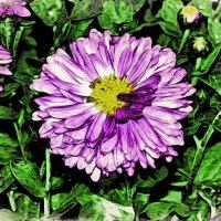 Отцвели уж давно хризантемы в саду.. :: Андрей Заломленков