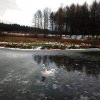 Снежную бабу слепили вчера, а сегодня она поплыла... :: Елена Павлова (Смолова)
