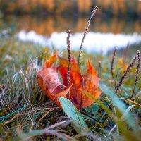 Осени уже смелые шаги :: Олександр Волжский