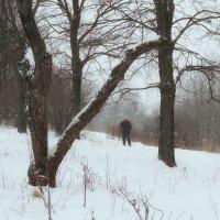 Снегопад ... :: Лариса Корж