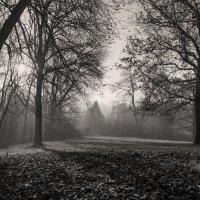 В лесу... :: Сергей