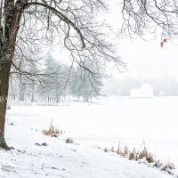 Дерево и Турецкая Баня :: Юлия Батурина
