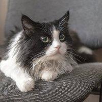 Коты ...) :: Светлана Мельник