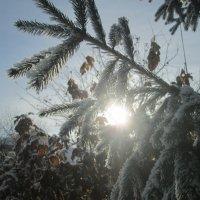 Красоты декабря :: Алексей Кузнецов