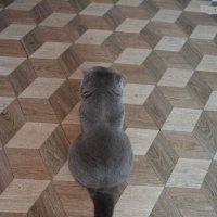 геометрия кота :: Наталия П