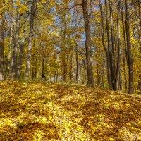 Золото октября :: Владимир Жданов