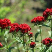 Про цветы. :: Андрей