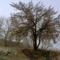 Осенний туман. :: Владимир M