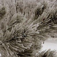 Зимние картинки. фото-2. :: Nata