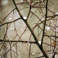 Зима наступает. :: barsuk lesnoi