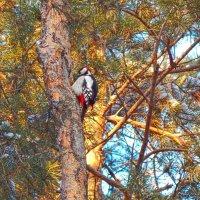 Лесной лекарь! :: Елена (Elena Fly) Хайдукова