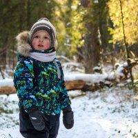 Кто со мной на прогулку по зимнему лесу? :: Елена Верховская