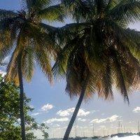 Где-то на Гренаде :: Кирилл