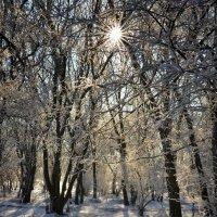 Зимнее утро :: Александр Довгий