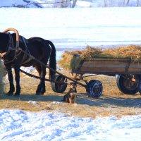 Лошадь и собака :: Екатерина