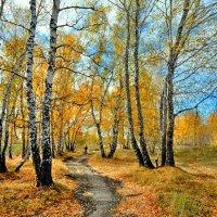 Прогулка по осени :: Mikhail Irtyshskiy