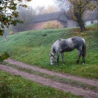 Нечаянная встреча... (О белой в яблоках лошадке) :: Наталья Костенко