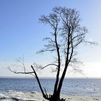Одиночный заплыв :: Николай Танаев