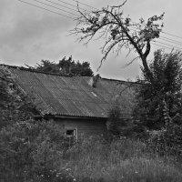 Плат по бровь :: Евгений Кочуров