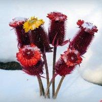 В поисках аленьких цветочков в декабре...:-) :: Андрей Заломленков