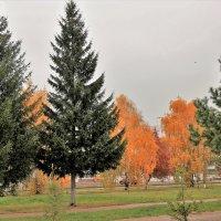Вспомним осень золотую. :: Венера Чуйкова
