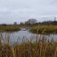 Ноябрь на болоте... :: Вадим *