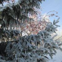 декабрьские красоты :: Алексей Кузнецов