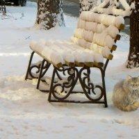 Зимний день. :: Nata